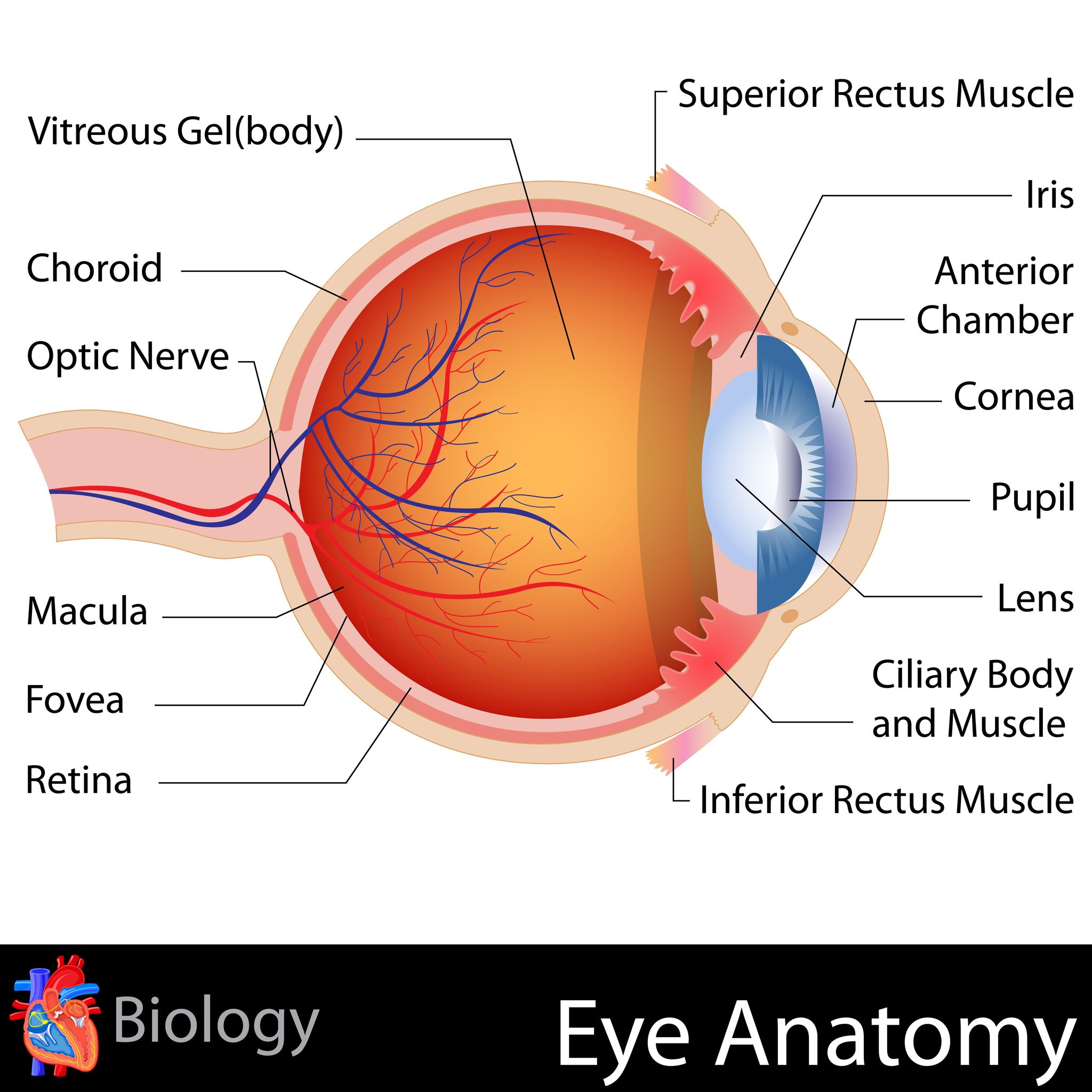what is dry macular degeneration