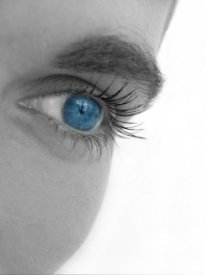 macular degeneration research