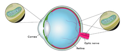 dry amd research