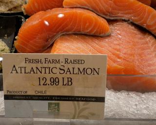 Atlantic or wild caught salmon health benefits