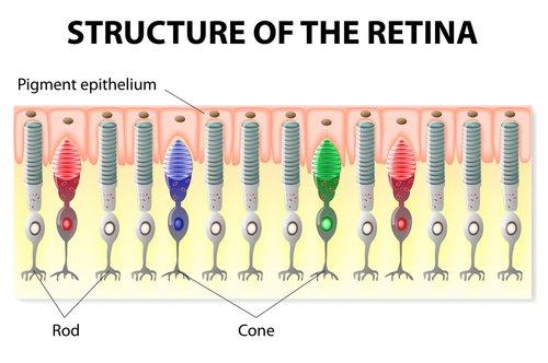 definition of macular degeneration